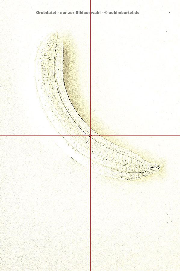 Banane_a_10 kopieren